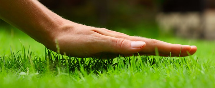 using skin to feel grass